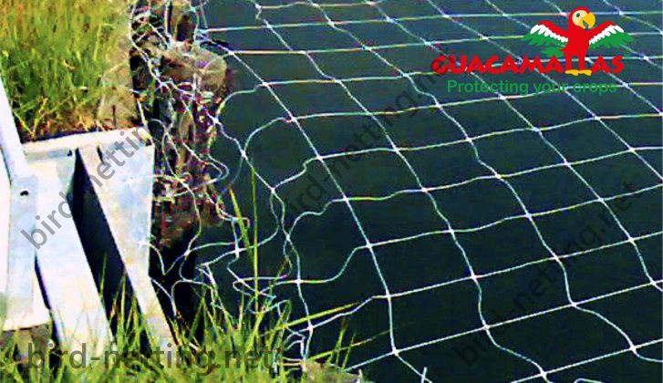 Anti-bird netting protection over a pond for aquaculture