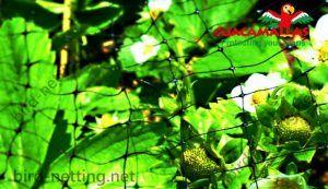 guacamalla net used in garden