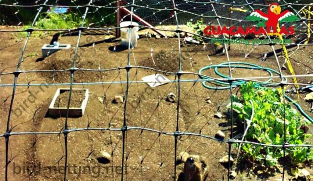 Vegetables netting cultivation with anti bird protection