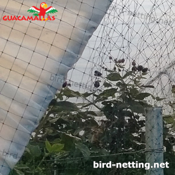 crops in greenhouse using bird net