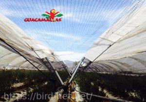 aviary netting