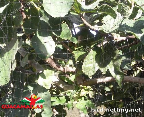 anti bird net protecting tree